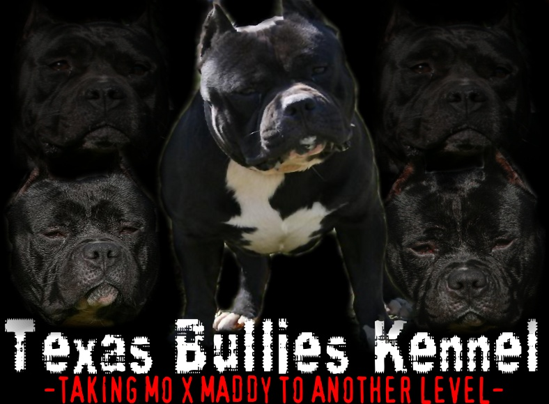 TEXAS BULLIES KENNEL